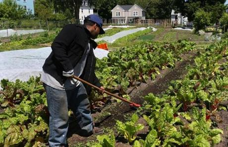 Zoning changes lowered the barriers for establishing commercial farms in Boston.